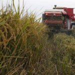 El 70 % de las personas con inseguridad alimentaria del mundo vive en el campo. FOTO EDH