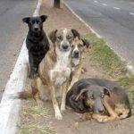 Perros callejeros salvan a niña de ser violada