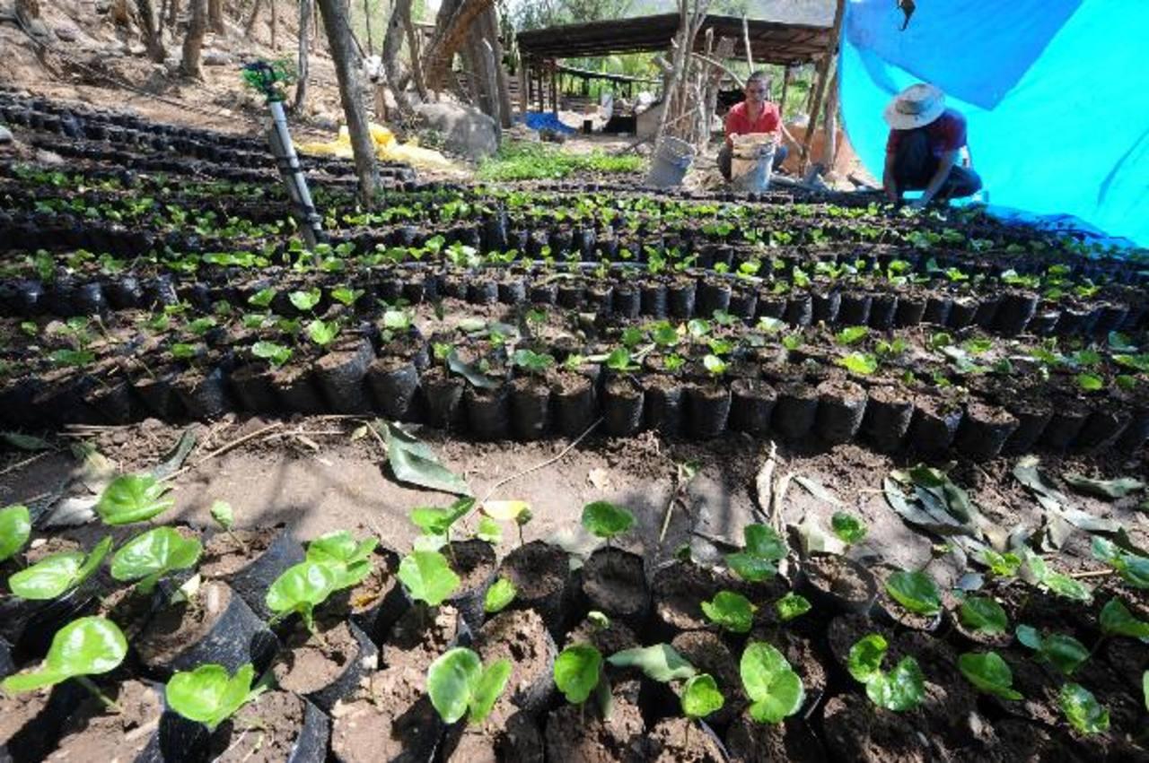 La entrega de plantas finalizó en agosto del año pasado y el pago aún no está completo, según viveristas. Foto EDH/archivo