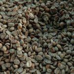 El mejor café salvadoreño fue vendido a empresas coreanas y japonesas, entre otras. Foto EDH/ archivo
