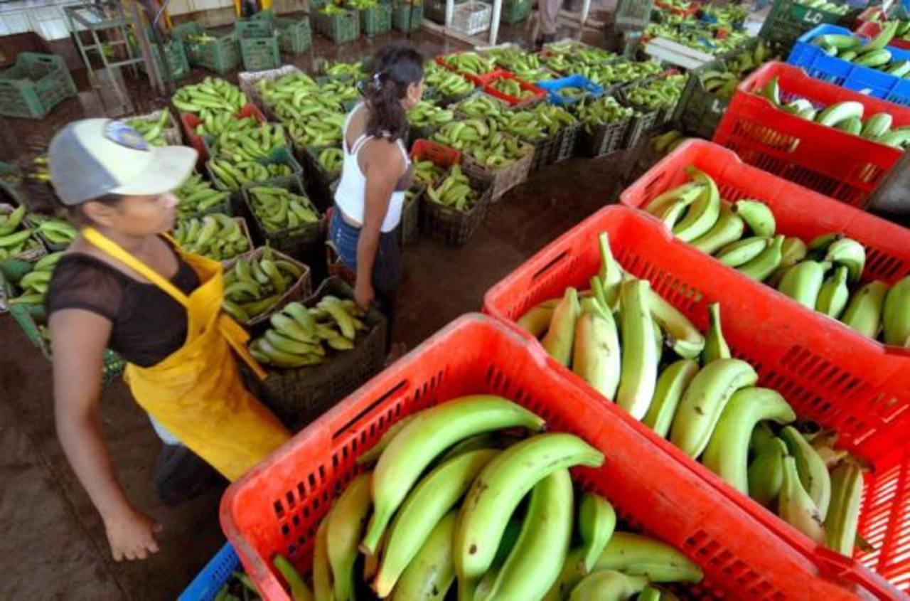 La economía nicaragüense crecerá 5.2 % en 2013, según los resultados del primer semestre. Foto EDH /archivo