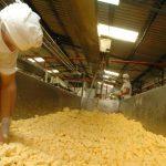La producción de quesos en el país está cada día más industrializada y se producen quesos como parmesano o emmental. Foto EDH /archivo
