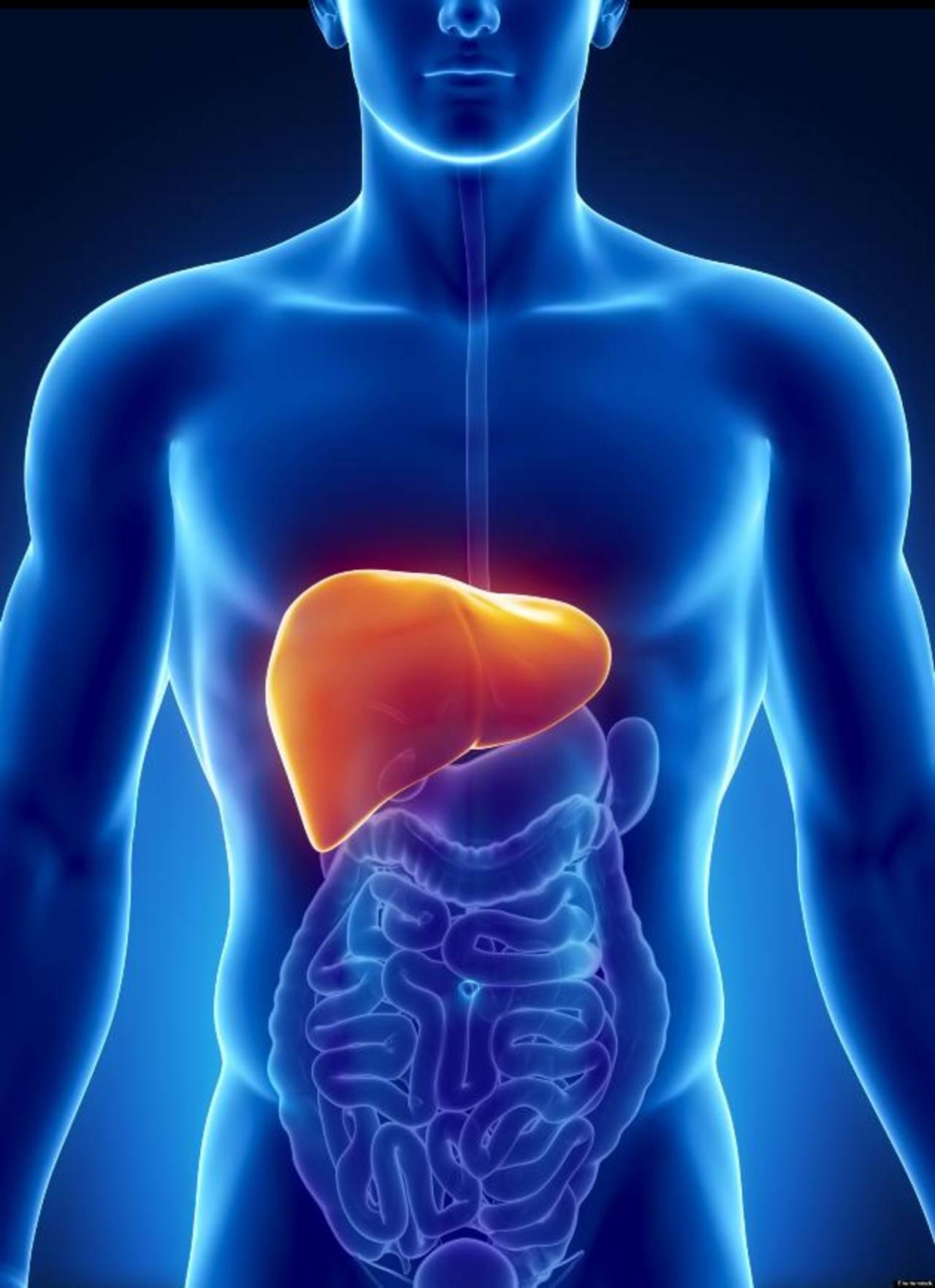 Científicos crean hígado humano con células madre | elsalvador.com