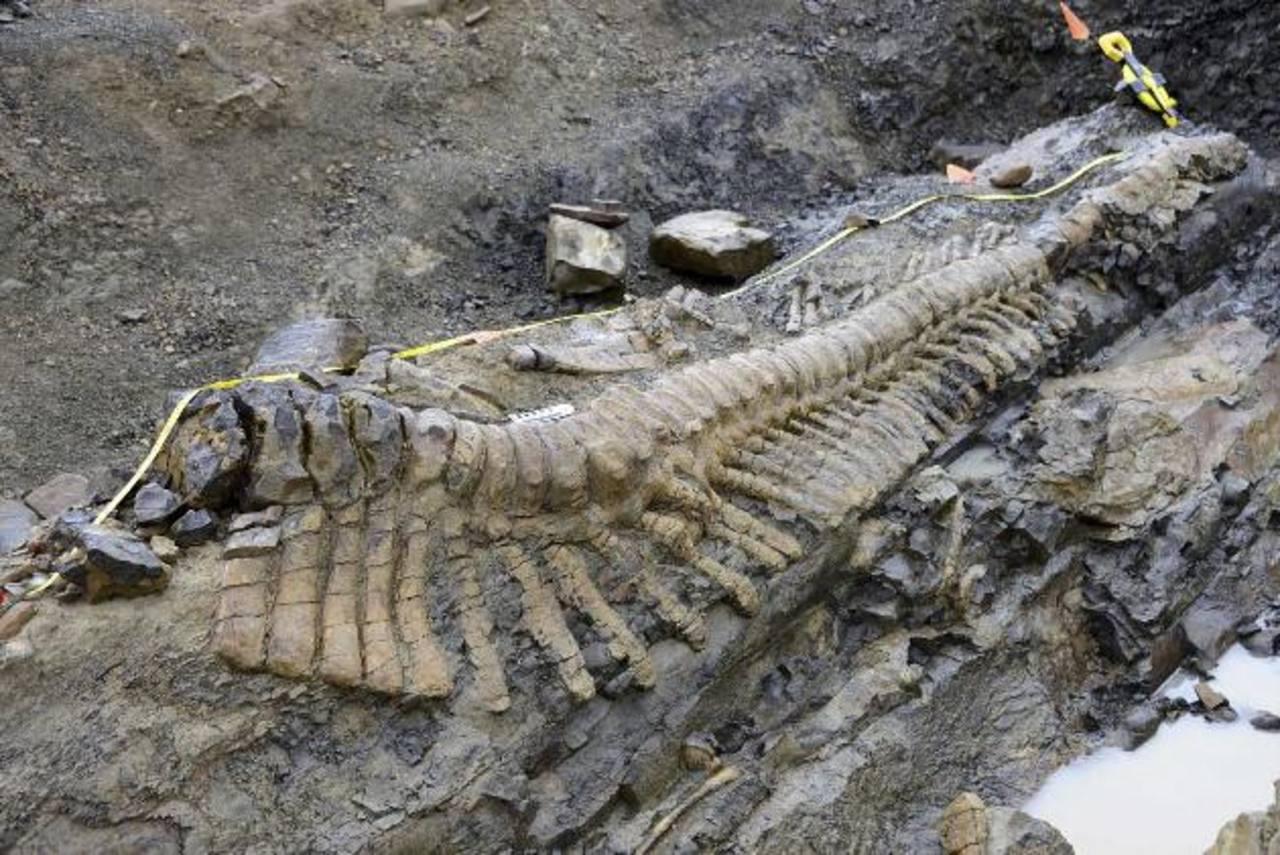 La cola de dinosaurio en el sitio de una excavación paleontológica cerca del pueblo de General Cepeda en el norteño estado de Coahuila. Foto/ AP