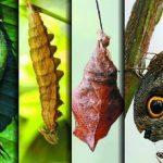 Fotos: El mundo de las mariposas