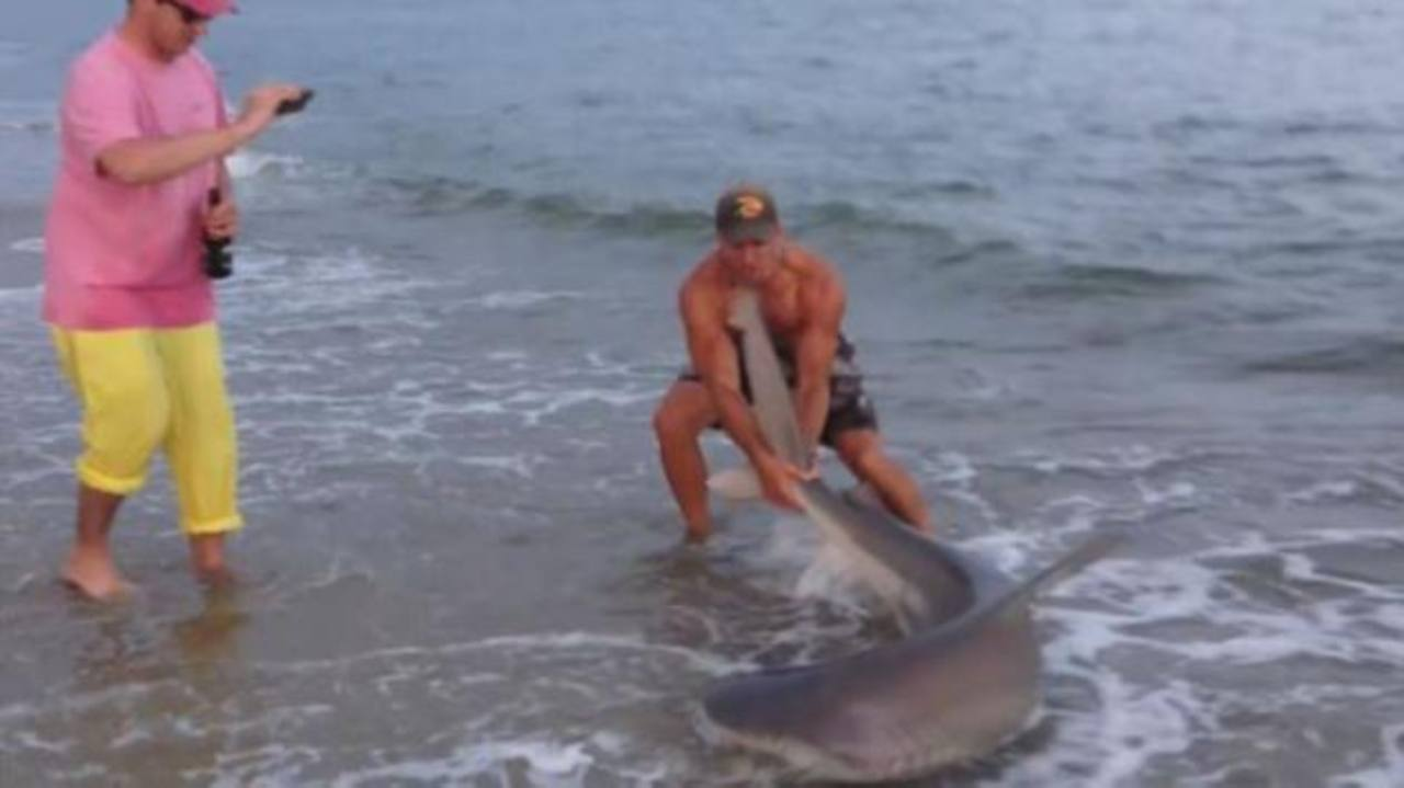 Vídeo: Estadounidense caza tiburones con las manos
