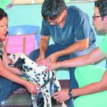 Las autoridades pretenden con la vigencia de esta clínica veterinaria, administrada por la comuna, dar un mejor tratamiento a los animales. Foto EDH / ROBERTO DÍAZ ZAMBRANOLas autoridades pretenden dar un mejor tratamiento a los animales. Foto EDH /