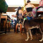 La presencia de perros en el mercado desespera a muchos. Foto EDH/ francisco torres