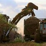 Brasil, uno de los mayores productores de azúcar en el mundo, se ha planteado producir etanol, para reponerse de futuros precios bajos.