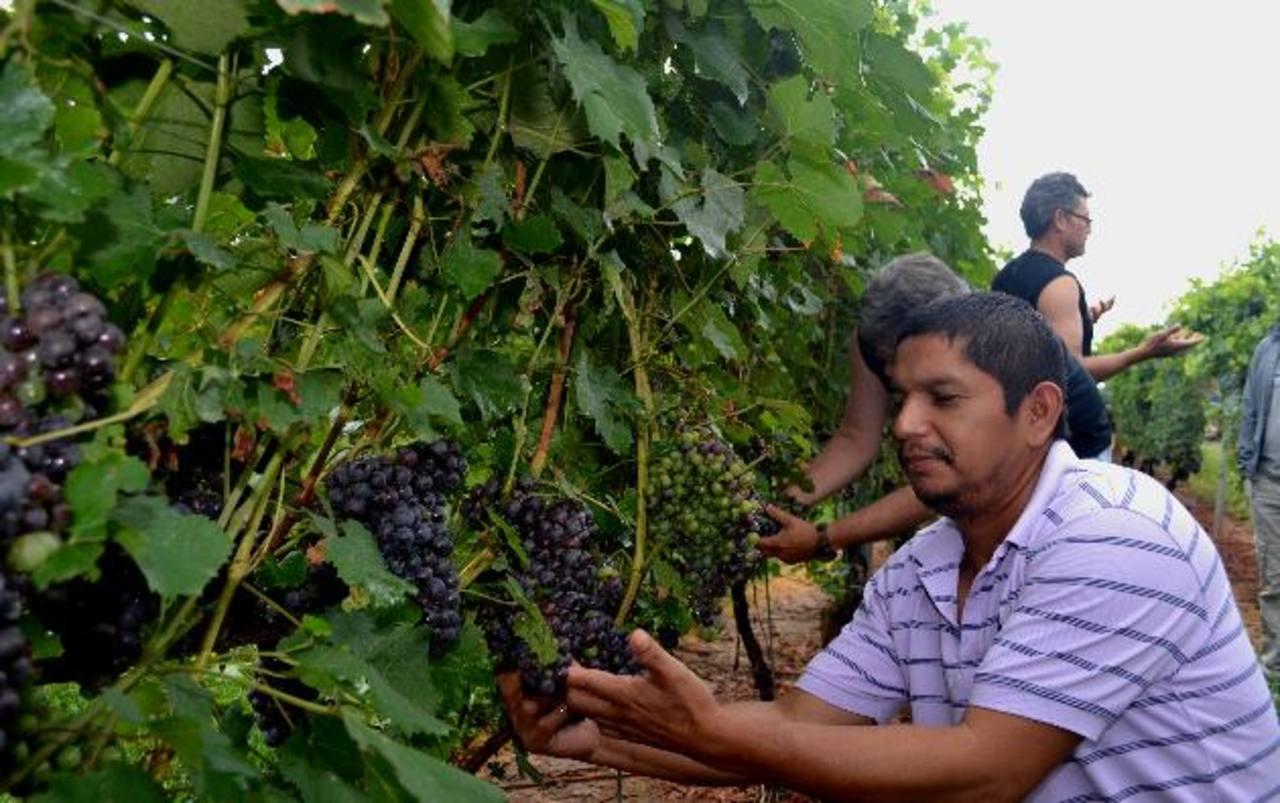 Estos compatriotas realizan las jornadas en un envidiable paraje de montañas y agradable clima veraniego mientras adquieren conocimientos especializados para el cuido de las plantas de uva