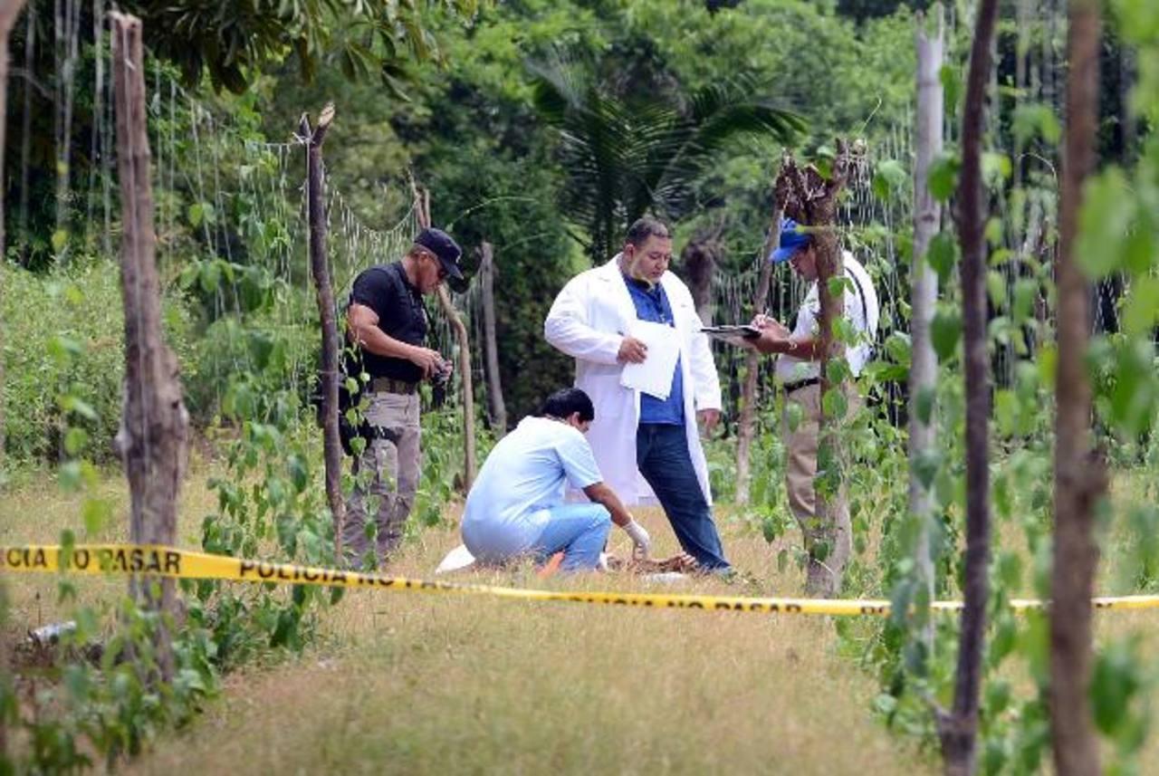 El doble asesinato fue cometido entre unos cultivos de loroco. Foto EDH / Oscar Mira