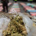 Incautan 100 libras de marihuana