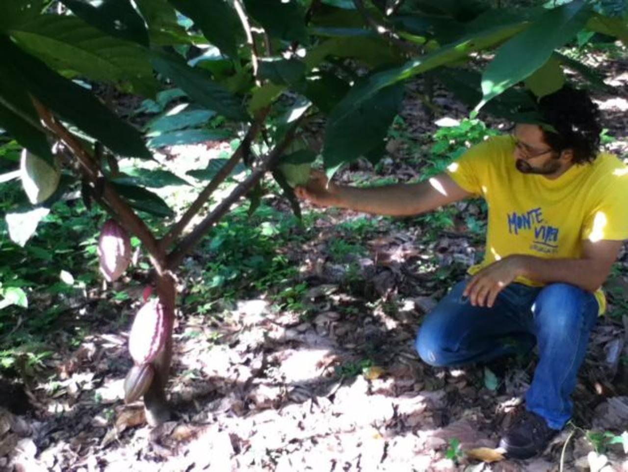Fernando Aguilar, en una de sus visitas a plantaciones de árboles de cacao. Foto EDH / CORTESÍA.