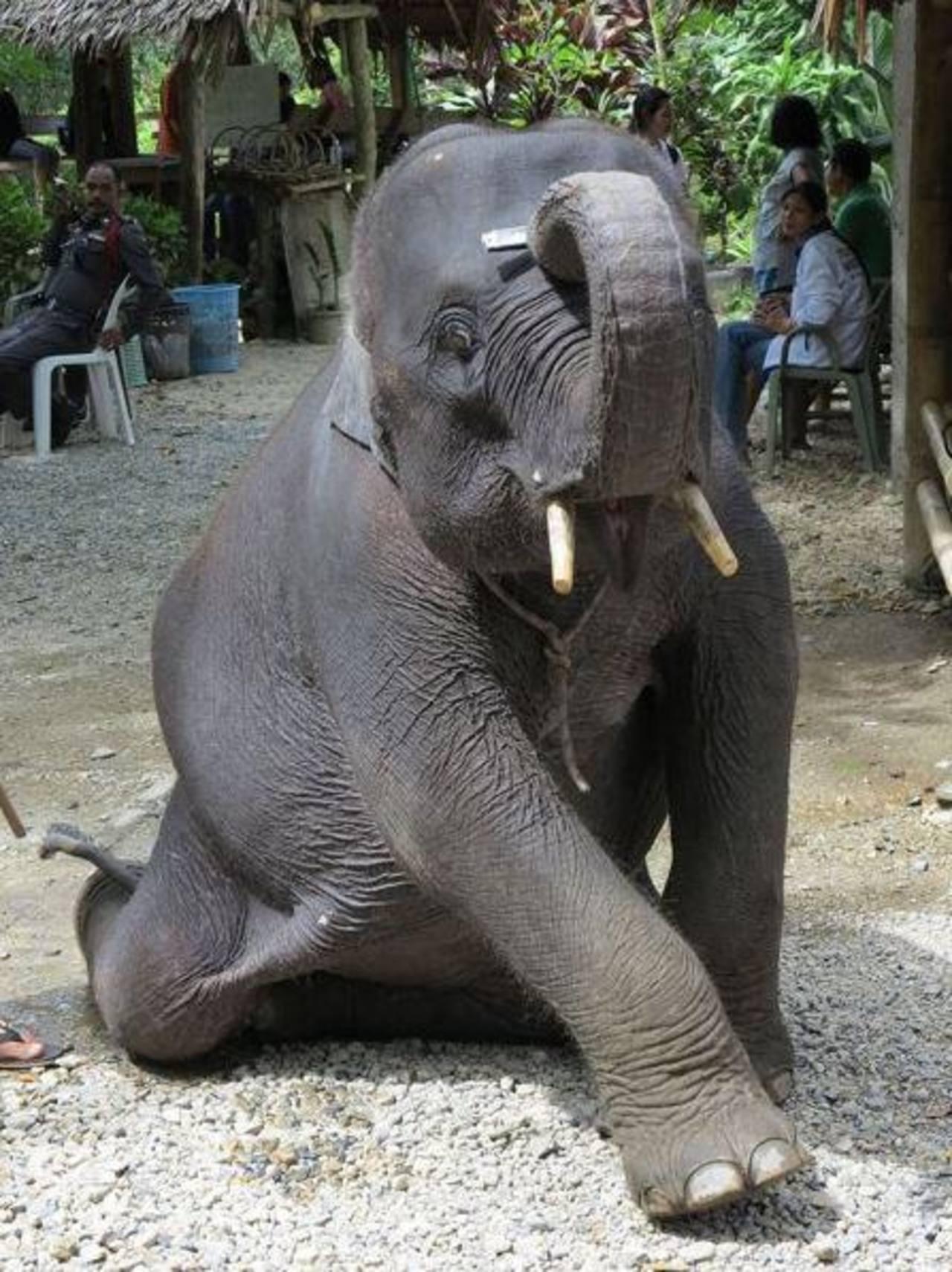 Policía decomisa elefantes indocumentados
