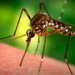 Vídeo: Esto pasa en el cuerpo cuando es picado por un mosquito