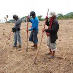 Varios agricultores se adelantaron a sembrar la cosecha postrera, pero la perdieron por pocas lluvias. Foto EDH /insy mendoza