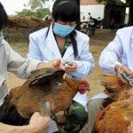 Expertos creen que la fuente de infección fue el mercado de aves de corral vivas.