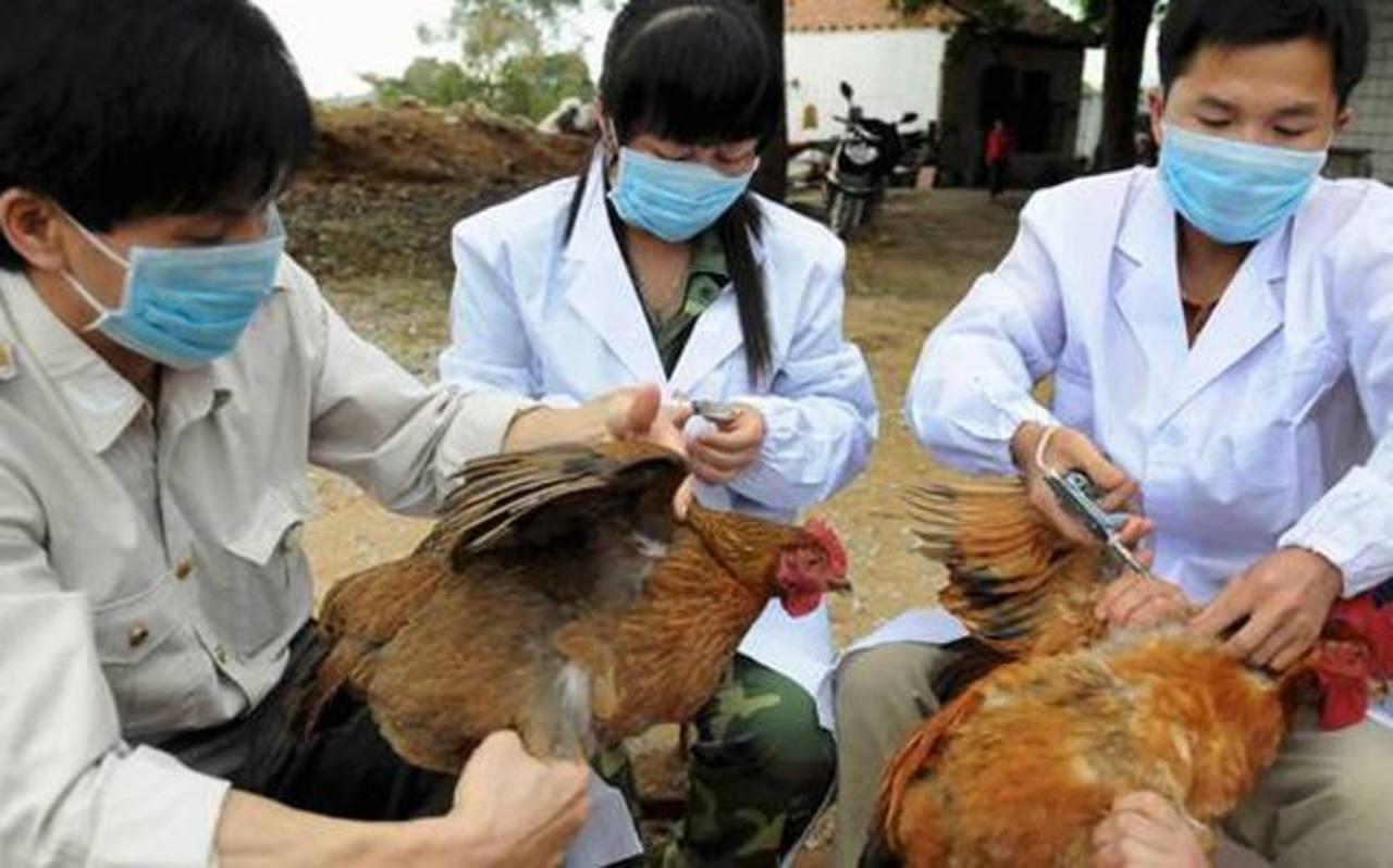 Resultado de imagen para La Gripe Aviar