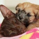 La gata Coco y su hijo adoptivo Hope. Foto tomada de rossparry.co.uk