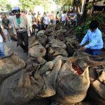100 mil empleos perdidos por roya y precios de café