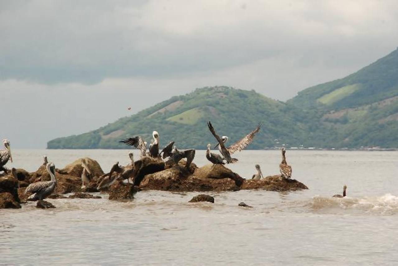El avistamiento de diferentes aves en esta zona, llama la atención de vecinos y visitantes que aprovechan para fotografiarlas en su ambiente natural foto edh / Insy Mendoza