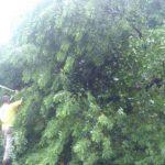Por la humedad éste árbol cayó en un tramo de la carretera que conduce a San Marcos. FOTO EDH Ericka Chávez.