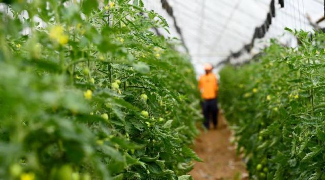 El PCN pide a Funes vete la prohibición al uso de agroquímicos