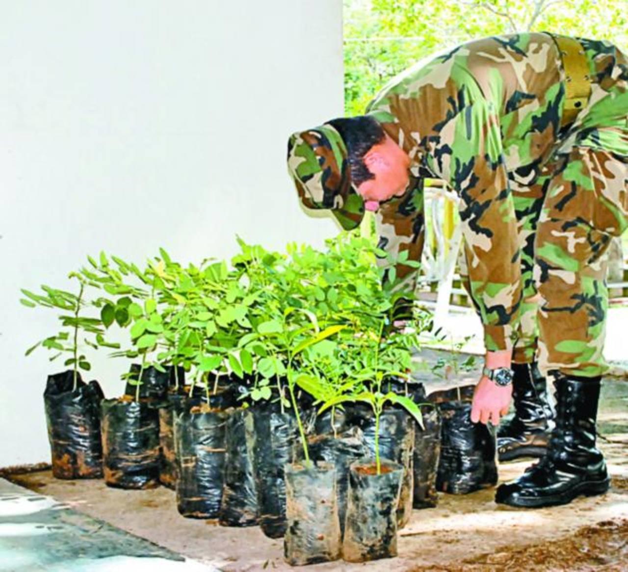 Las plantas que se han donado en la actividad son parte del vivero que mantiene el regimiento militar. Foto EDH / insy Mendoza