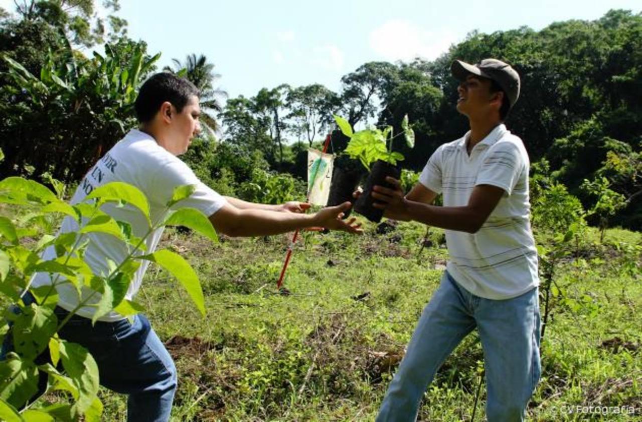 Mil 200 árboles fueron sembrados en la cuenca de Coatepeque, esta área fue deforestada en 2005 con la erupción del volcán Ilamatepec. foto edh / cortesíaCerca de 600 voluntarios, entre ellos estudiantes de colegios y universidades, se unieron al comp