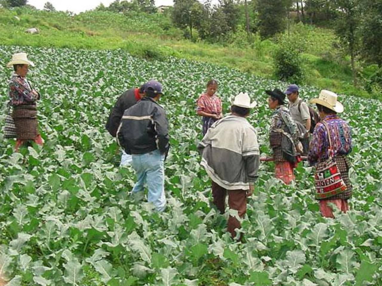 La lluvia podría anegar muchos cultivos. Foto EDH/archivo