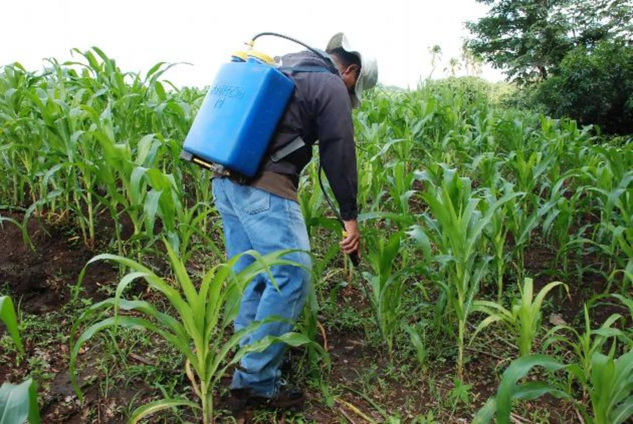 Agricultores no tienen alternativas para el cuido de cosechas.