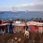 Personal del instituto con la serpiente marina gigantesca hallada en las aguas de Santa Catalina, California. Foto/ AP