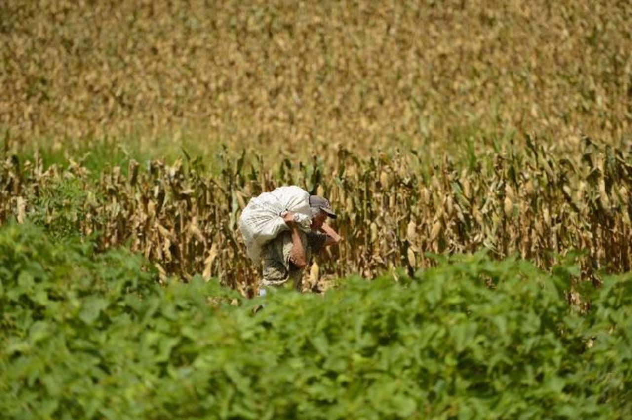 Uno de cada 8 habitantes del planeta todavía padecen hambre crónica. Foto EDH / archivo