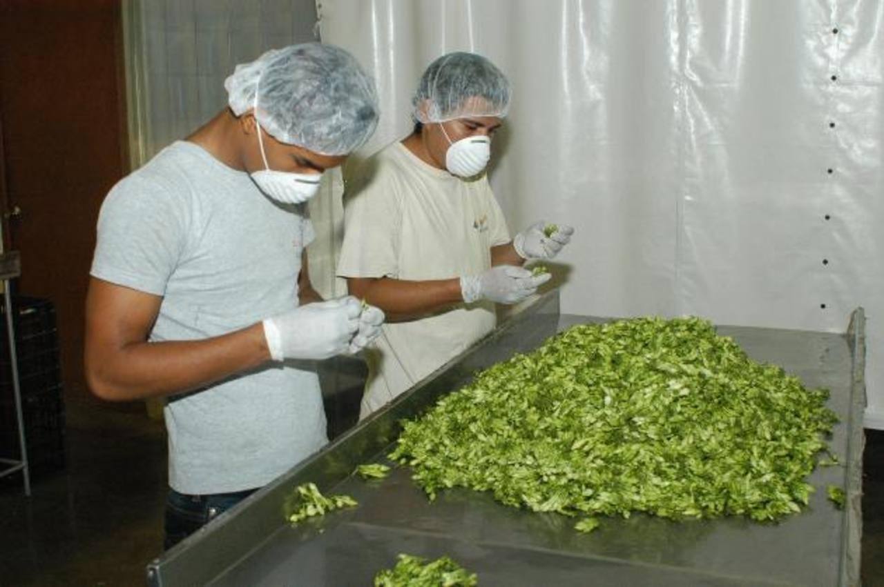 La ley estableció nuevas medidas de seguridad para tratar los alimentos. Foto EDH / archivo