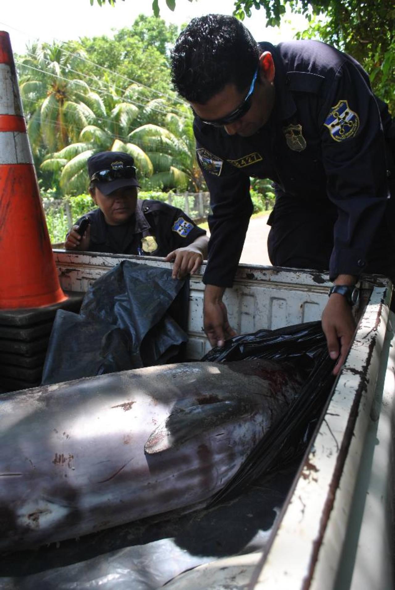 El cadáver del delfín nariz de botella fue sepultado en La Geo para fines educativos. foto edh / cortesía.