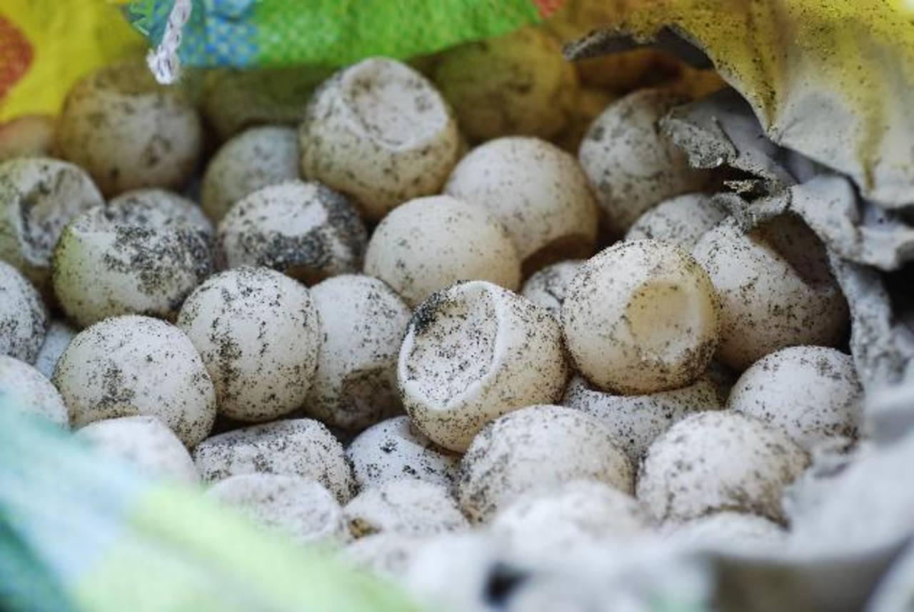 La venta de huevos de tortuga está prohibida por la ley. FOTO EDH