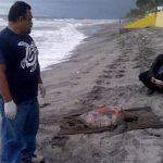 Hallan más tortugas muertas en playa El Pimental