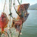 El mercurio que llega al mar tiende a acumularse en los peces y así entra en la cadena alimenticia.