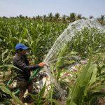 Los agricultores quieren ingresar al mercado formal y obtener más ganancias. Foto edh/archivo
