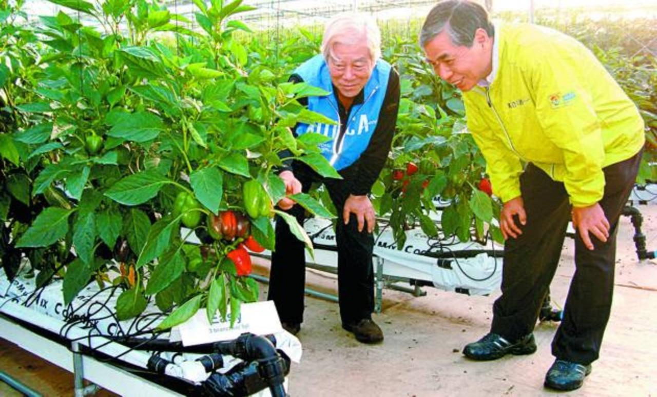 La embajada de Corea apoya a El Salvador con expertos que comparten sus conocimientos. Foto EDH / cortesía