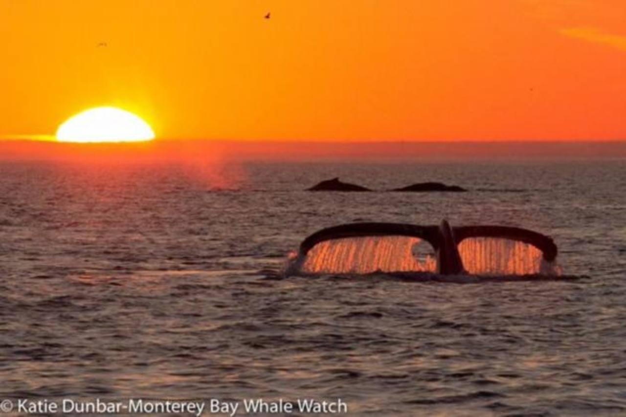 Bióloga capta espectacular foto