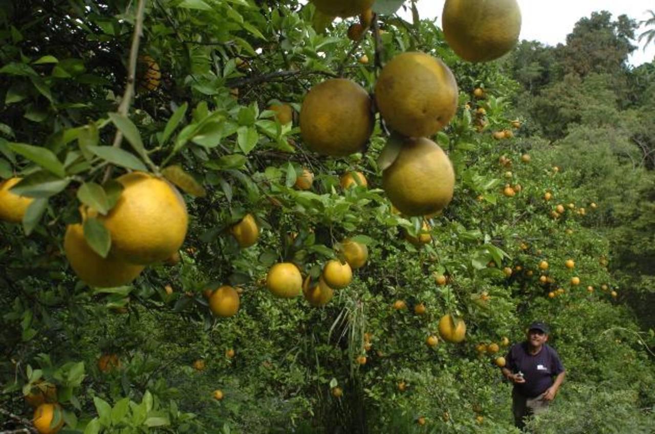 Los Nonualcos tiene un gran potencial para la producción de café de altura y otros productos agrícolas. FOTO EDH / Archivo