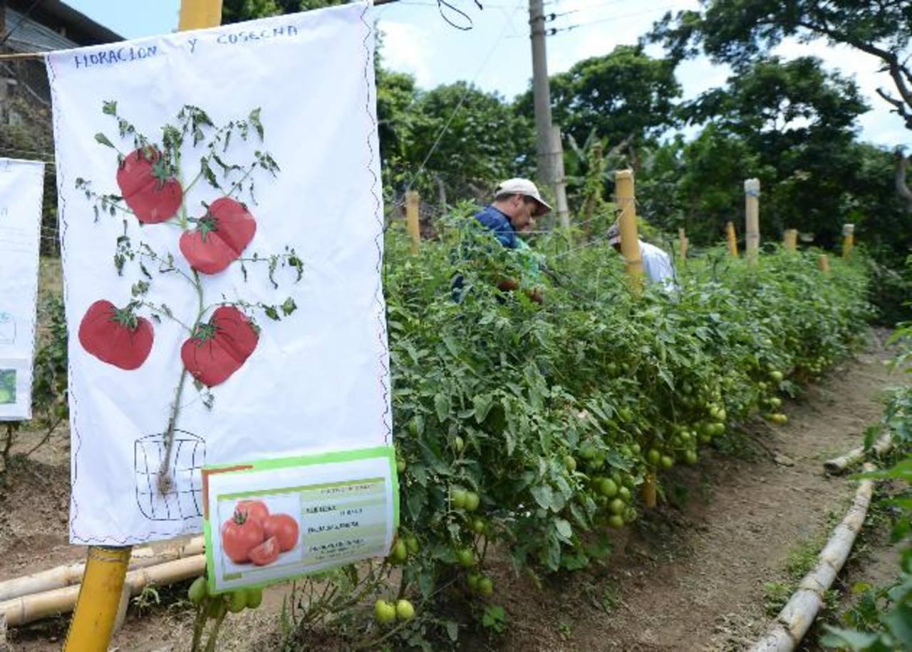 Además de obtener cosechas abundantes, muchas personas aprenden sobre variedades y forma de cultivar.
