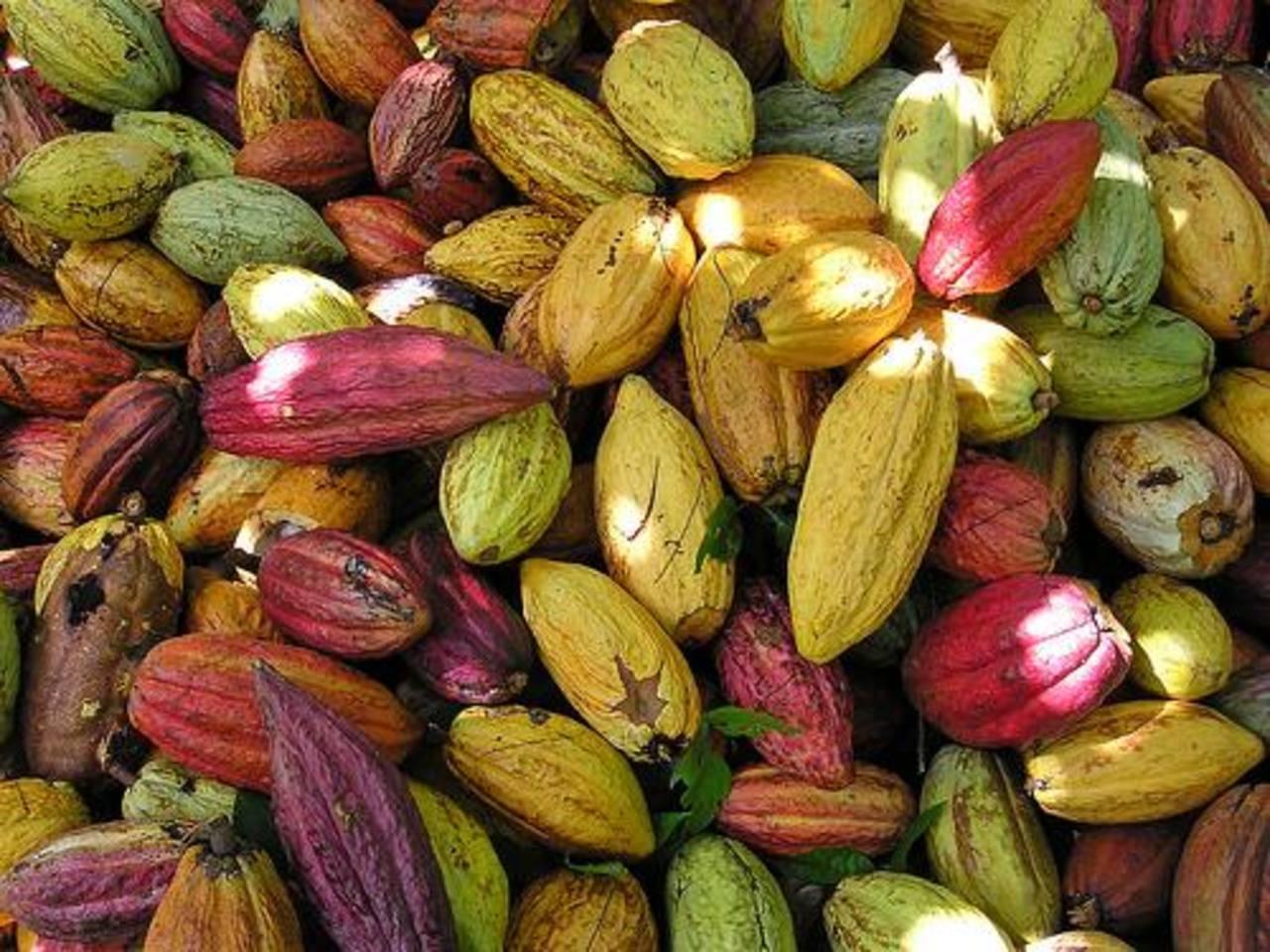 R. Dominicana busca duplicar exportaciones de cacao