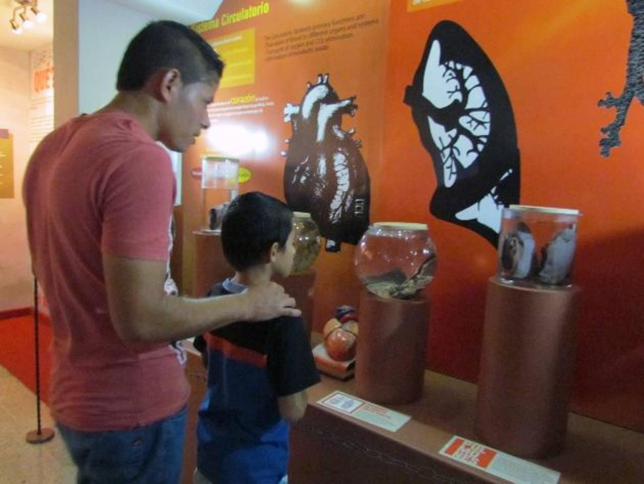 Museo de anatomía recibe visita nocturna | elsalvador.com