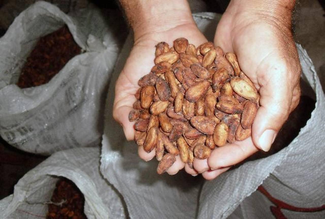 La zona oriental del país fue la que percibió mayor crecimiento en el cultivo de cacao. foto EDH/archivo