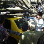 Al menos cinco vehículos fueron dañados tras la caída de un árbol en el puesto policial de Mejicanos. Foto vía móvil Jaime Anaya