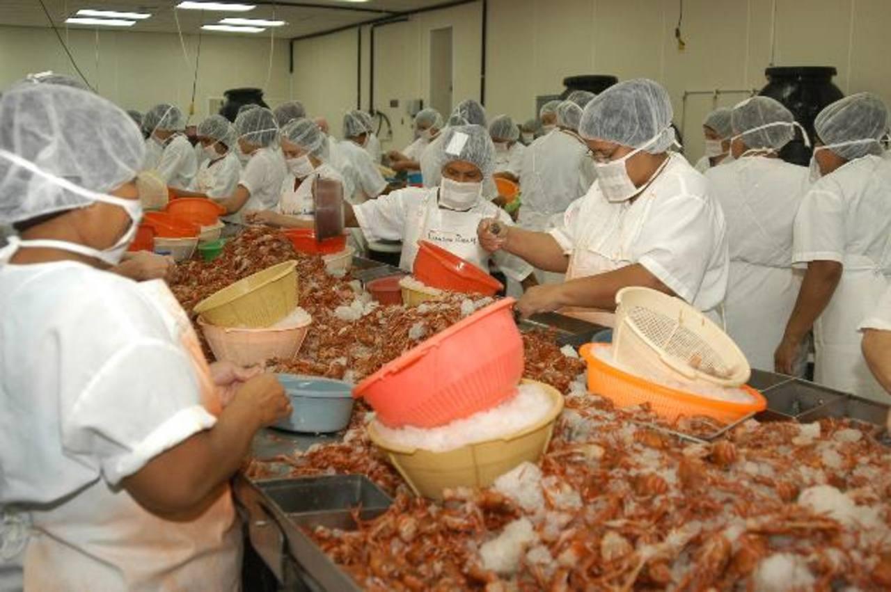 El camarón es de los productos que ha incrementado sus exportaciones. foto edh / archivo