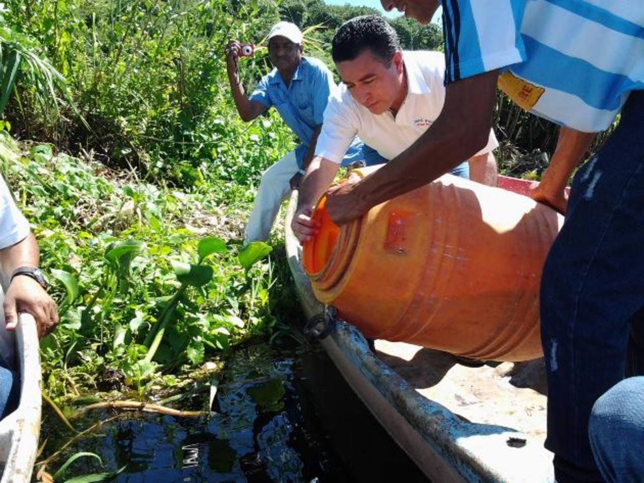 El candidato tricolor participa en la siembra de los alevines en la laguna El Jocotal, en San Miguel. foto edh / cortesía
