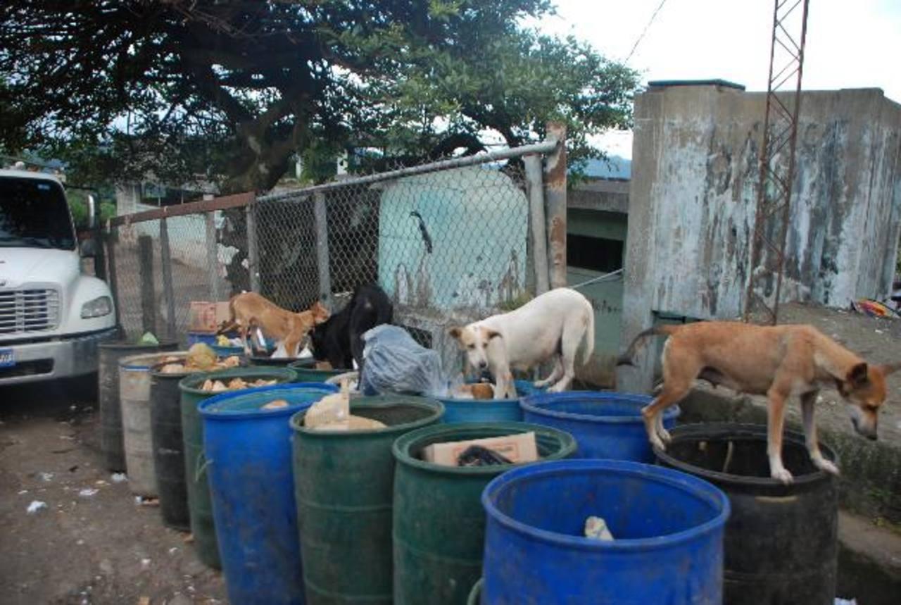 A pesar de que hace una semana no destazan en el lugar aún hay perros callejeros y aves de rapiña cerca. Foto edh/ Francisco Torres